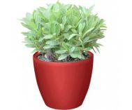 Samozavlažovací květináč G21 Ring mini červený 15 x 9,5 x 12,6 cm