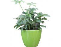 Samozavlažovací květináč G21 Ring zelený 17.5 x 11,3 x 15 cm