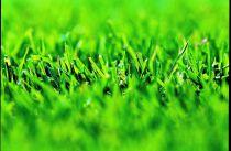 Travní osivo WOLF-Garten SG 100 pro hry a sport (3825845) WOLF Garten